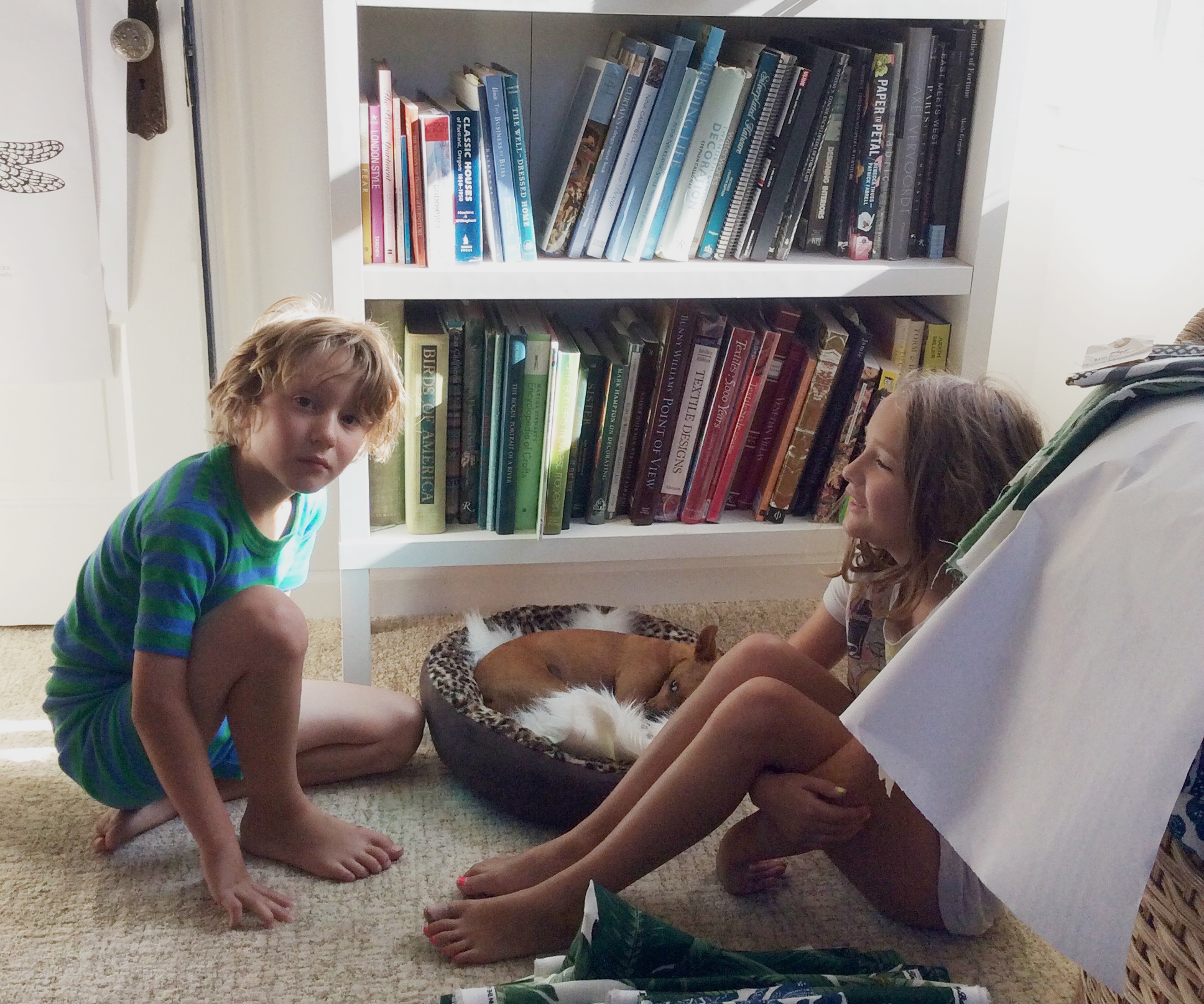 A common scene in my tiny office...Charlotte, Arthur and our Chihuahua rescue, Pumpkin