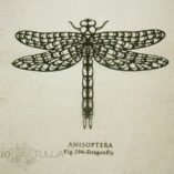 tote-dragonfly-2